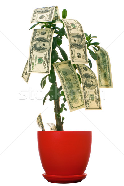 Dollars arbre croissant monétaire isolé blanche Photo stock © timbrk