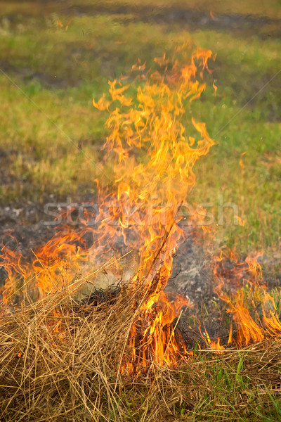 Palenie wyschnięcia trawy lata charakter ziemi Zdjęcia stock © timbrk