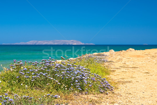 Wildflowers on a background seascape Stock photo © timbrk