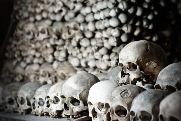 Human skulls Stock photo © timbrk