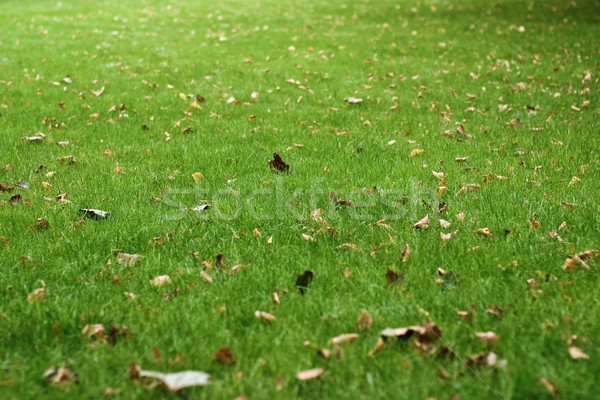 Withered leaves Stock photo © timbrk