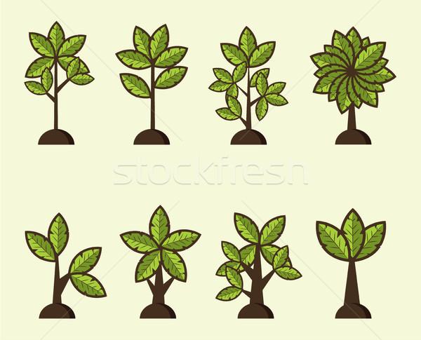 Rajz vektor fák szett illusztráció vicces Stock fotó © tina7shin