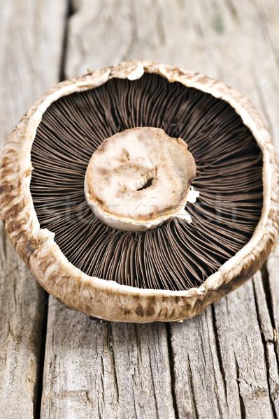 Gesunden frischen Pilz seicht Stock foto © tish1