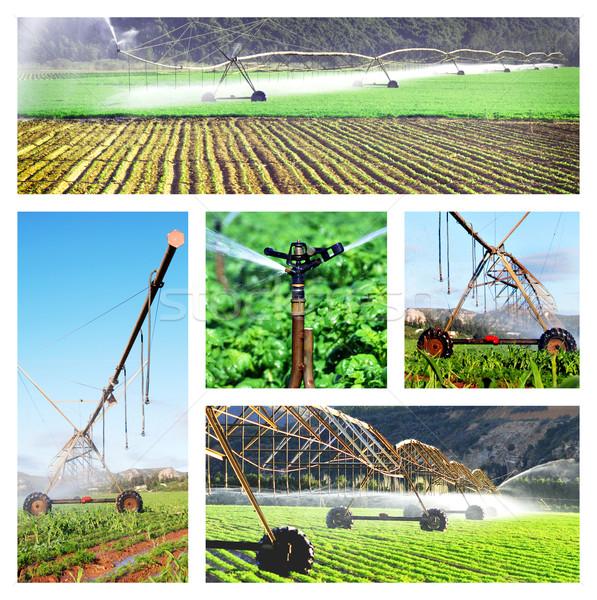Kolaż nawadnianie zdjęcia zdrowia przemysłu gospodarstwa Zdjęcia stock © tish1