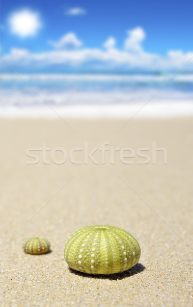 Beach scene with two dead sea urchins Stock photo © tish1