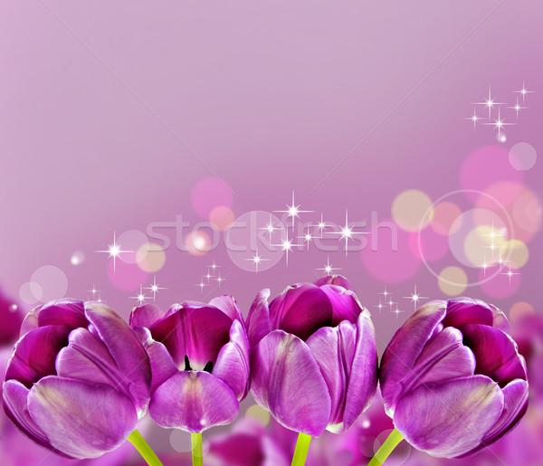 Stock fotó: Sötét · rózsaszín · tulipánok · gyönyörű · tavasz · százszorszép