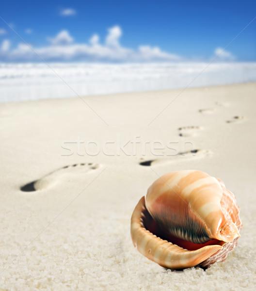 Stock foto: Meer · Shell · Fuß · Sandstrand · Strand · abstrakten