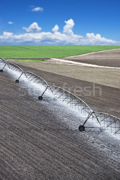 Farm field with irrigation system Stock photo © tish1