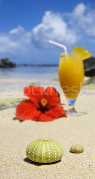 Sea urchin shells on the beach with a fresh fruit cocktail in the background Stock photo © tish1