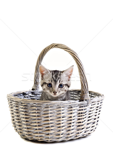 Adorable little kitten on white background Stock photo © tish1