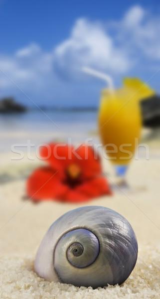 Mooie zee shell tropisch eiland strand vruchten Stockfoto © tish1