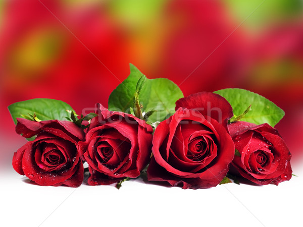 Rosa vermelha rosa folha fundo espaço dom Foto stock © tish1