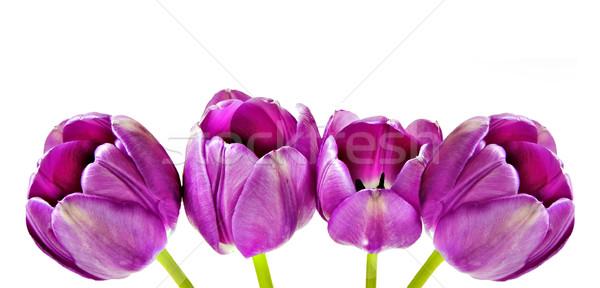 весны розовый тюльпаны цветок любви оранжевый Сток-фото © tish1