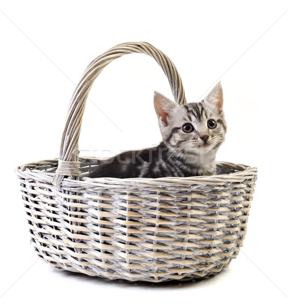Adorable little kitten on white background Stock photo © tish1