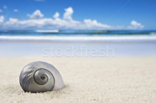 Güzel deniz kabuk plaj yaz Stok fotoğraf © tish1