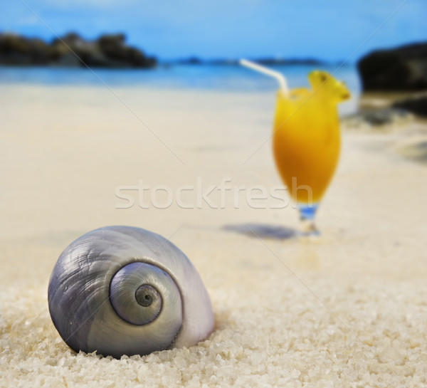Beautiful sea shell on a tropical island beach with fruit cocktail in background Stock photo © tish1