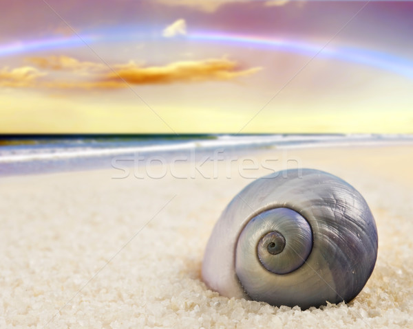a Beautiful perfectly shaped sea shell on the beach Stock photo © tish1