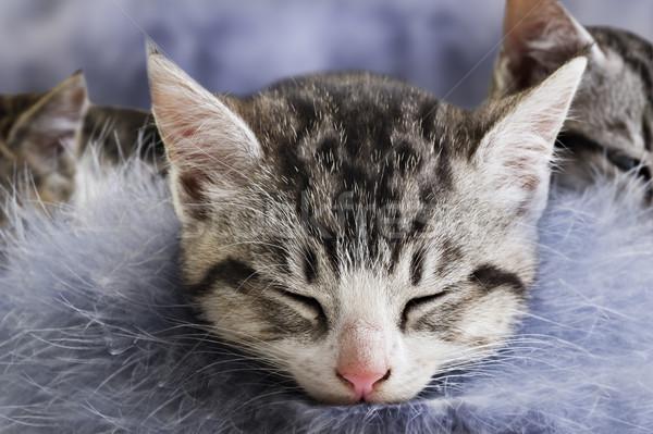 çok güzel küçük kedi yavruları bebek siyah beyaz Stok fotoğraf © tish1