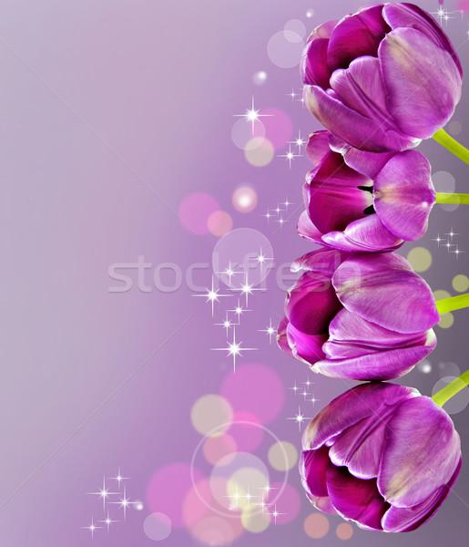Sötét rózsaszín tulipánok virág tavasz szeretet Stock fotó © tish1