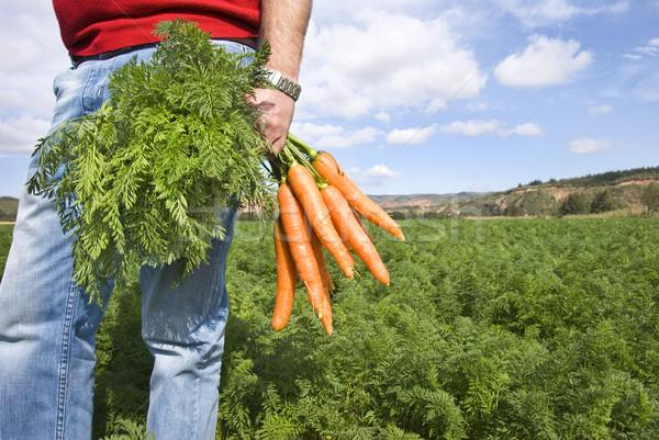 Foto stock: Cenoura · jeans · campo · fazenda · grama · saúde