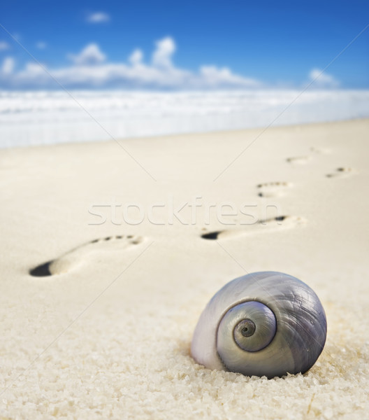 Sea shell and foot prints on a sandy beach Stock photo © tish1