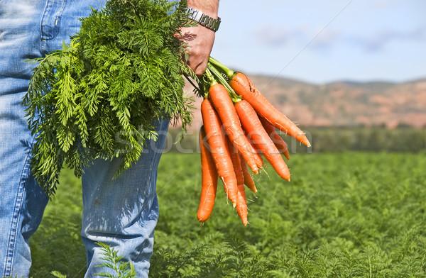 Carotte agriculteur domaine ferme herbe santé Photo stock © tish1