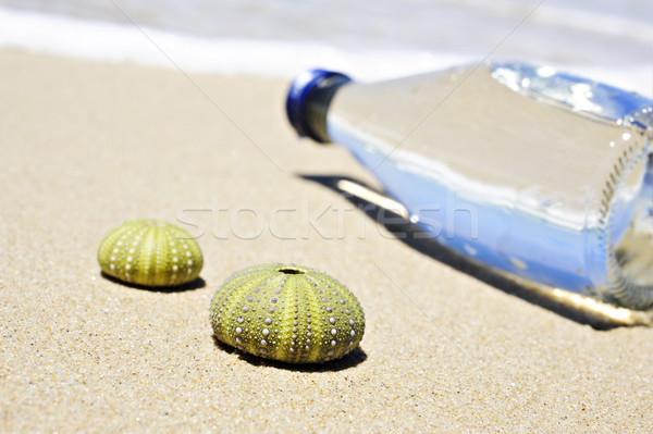 Beach scene with two dead sea urchin shells and a bottle of water Stock photo © tish1