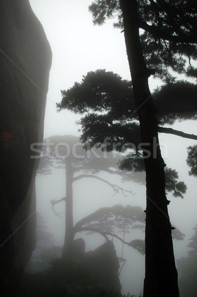 Stockfoto: Silhouet · pijnboom · sluiten · shot · berg · steen