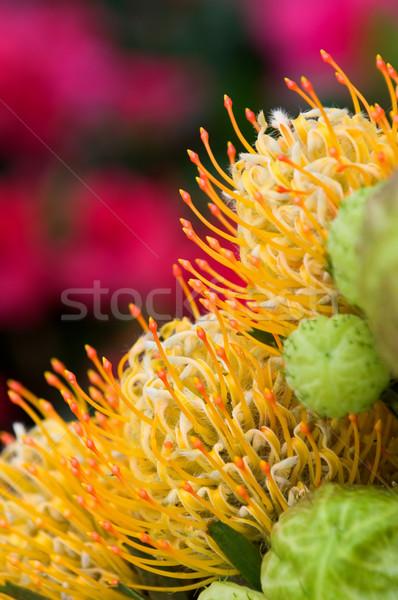 Amarillo flores naturaleza verde rojo Foto stock © tito