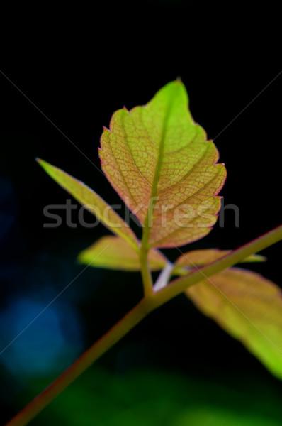Negro escalada planta textura forestales sol Foto stock © tito