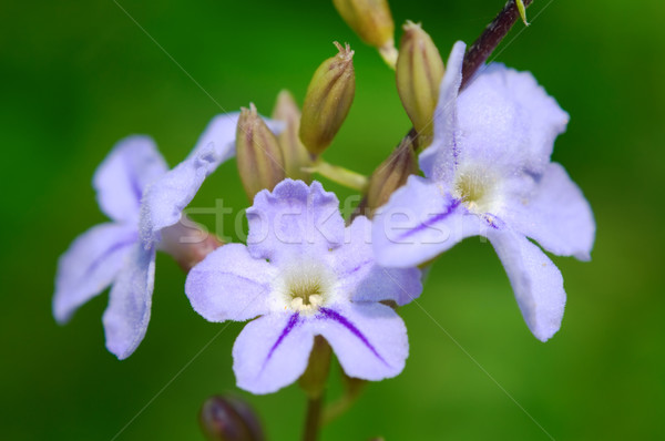 Roze klein weg bloemen details natuur Stockfoto © tito