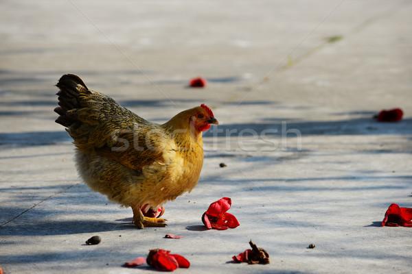 Kip lopen landelijk bloemen natuur kip Stockfoto © tito