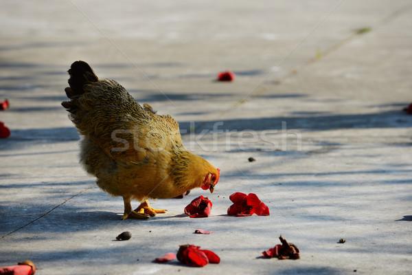 Henne Fuß ländlichen Blumen Natur Huhn Stock foto © tito