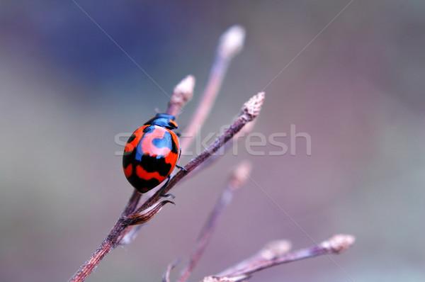 Mariquita secar escalada hasta superior rama Foto stock © tito
