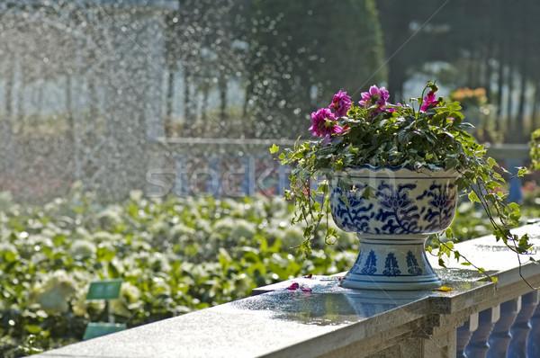Fleurs horticulture clôture jardin pierre douche Photo stock © tito