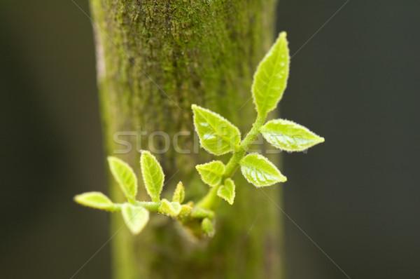 Hojas vista árbol primavera hoja Foto stock © tito