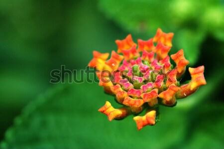Naturaleza verde rojo wallpaper hermosa Foto stock © tito