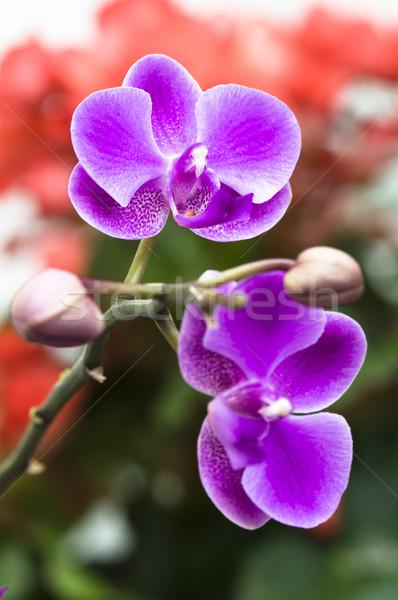 Orchidee bloem roze natuur blad Stockfoto © tito
