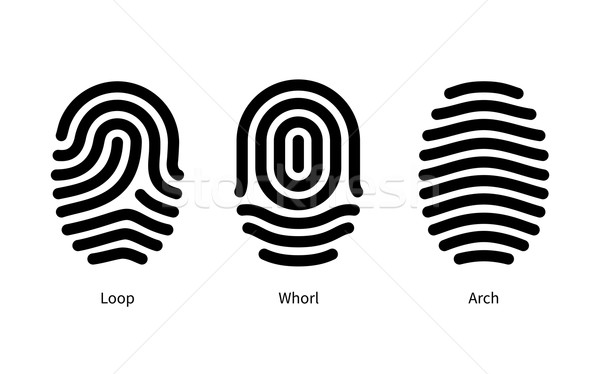Fingerprint id types on white background. Stock photo © tkacchuk