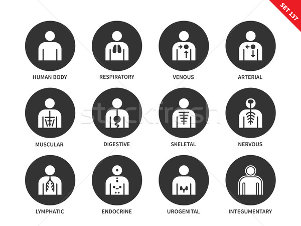 Human Anatomy and Body Systems vector icons set. Stock photo © tkacchuk