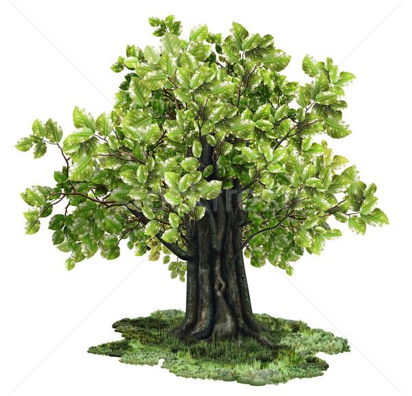 孤立した ツリー パス 木材 自然 夏 ストックフォト © TLFurrer