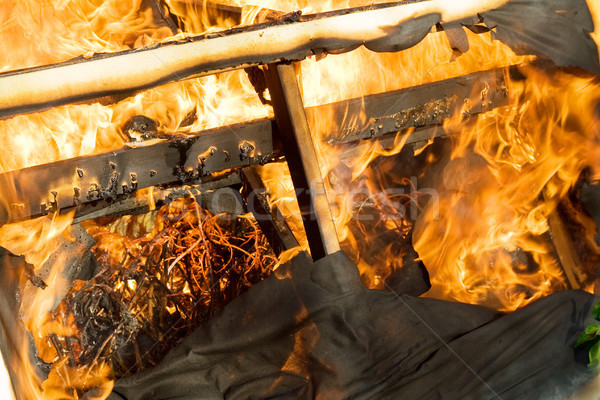 fire burning wood Stock photo © tlorna
