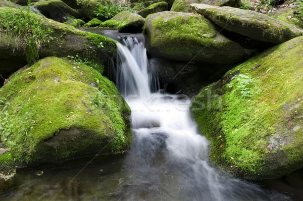 Mossy waterfall Stock photo © tmainiero