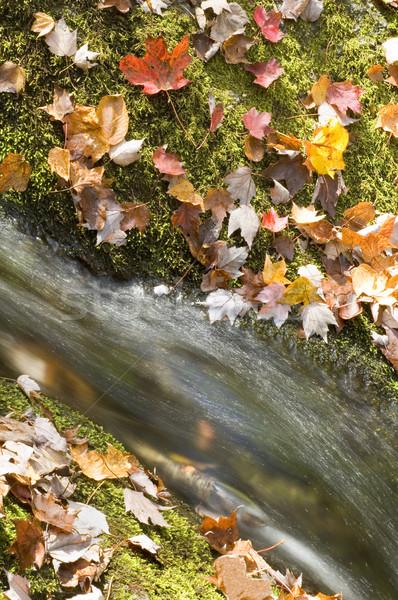 Sonbahar yaprakları çağlayan detay orman yaprak Stok fotoğraf © tmainiero