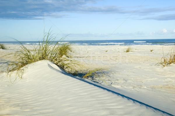 砂丘 美しい 海 強い 対角線 行 ストックフォト © tmainiero