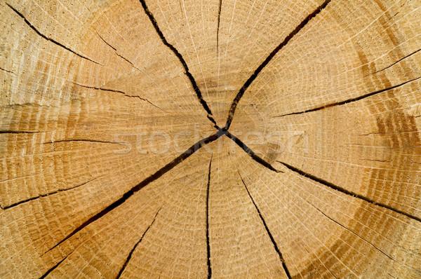 Cut Log Stock photo © tmainiero