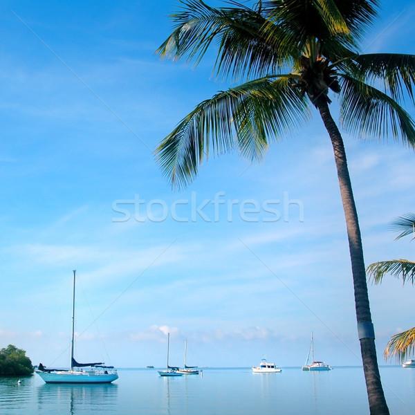 Tropikal okyanus görmek yelkenli hurma ağacı gökyüzü Stok fotoğraf © tmainiero
