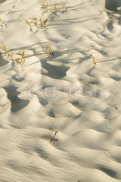 Duna playa cielo agua mar desierto Foto stock © tmainiero