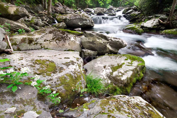 Montagne écouter belle cascade magnifique smoky Photo stock © tmainiero