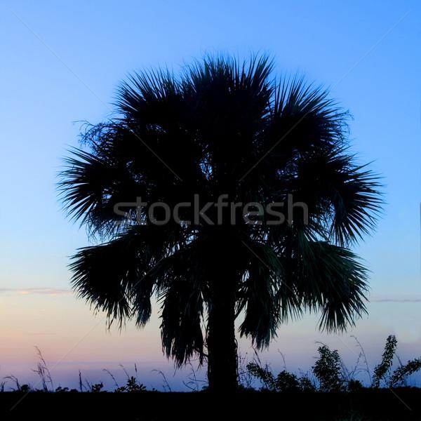 Palmier silhouette belle dynamique coucher du soleil arbre Photo stock © tmainiero